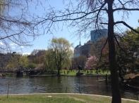 Swan Lake in Boston Public Garden