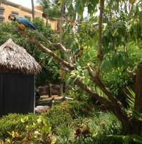 Parrots in Aruba