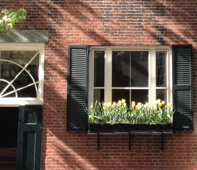 Boston Window Box