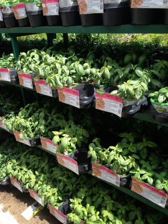 Herb garden herbs
