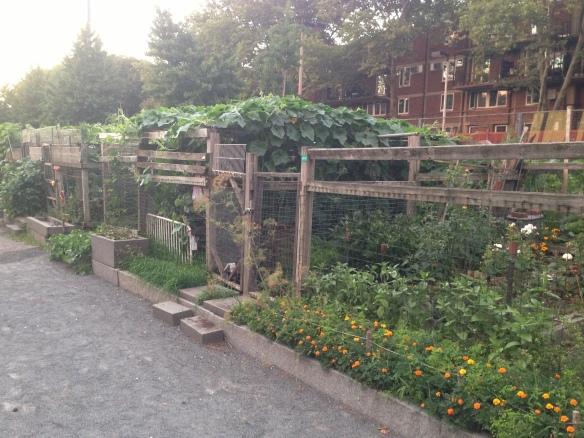 South End Communal Garden